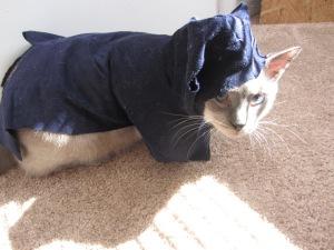 Catsassin Jacks
